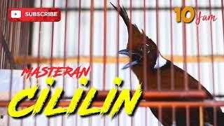 Download MASTERAN CILILIN DURASI PANJANG 10 JAM DENGAN TERAPI SUARA AIR, MASTERAN BURUNG LOMBA