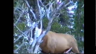 Животные Сибири. Животные лесной зоны.wmv