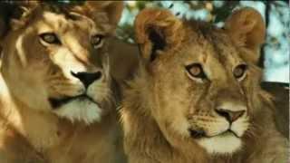 ford gt reviews jaguar tv commercial song