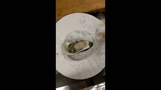 Где поесть устрицы Лучший ресторан в Воронеже El Chico Эль Чико
