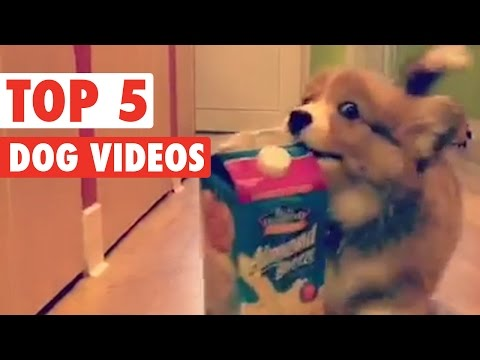 Top 5 Dog Videos || Feb 5 2016