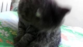 Говно-клип пьяное солнце с котом..лампа тип солнце