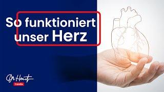 Wie funktioniert das Herz? | Dr. Heart