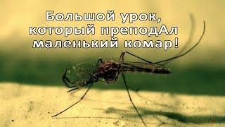 Большой урок, который преподАл мне маленький комар!