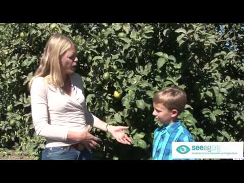 Ventura County Agriculture Education