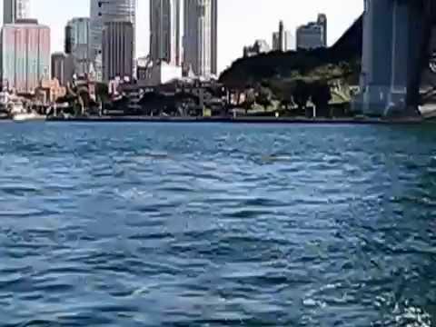 Dolphin Sydney Harbour Bridge - Opera House 2008