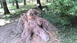 Абхазия   Сухум, Ботанический сад 6