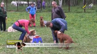 Превентивная работа по торможению внутривидовой агрессии собак в группе щенков на площадке