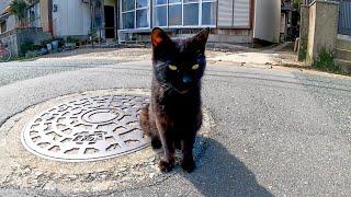 道端で出会った黒猫が付いてきたので撫でると超絶人懐っこい猫だった