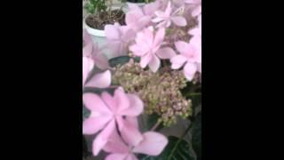 家のお花 その2.