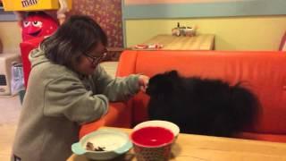 ドッグカフェで店長からジャーキーを食べさせてもらう真熊。