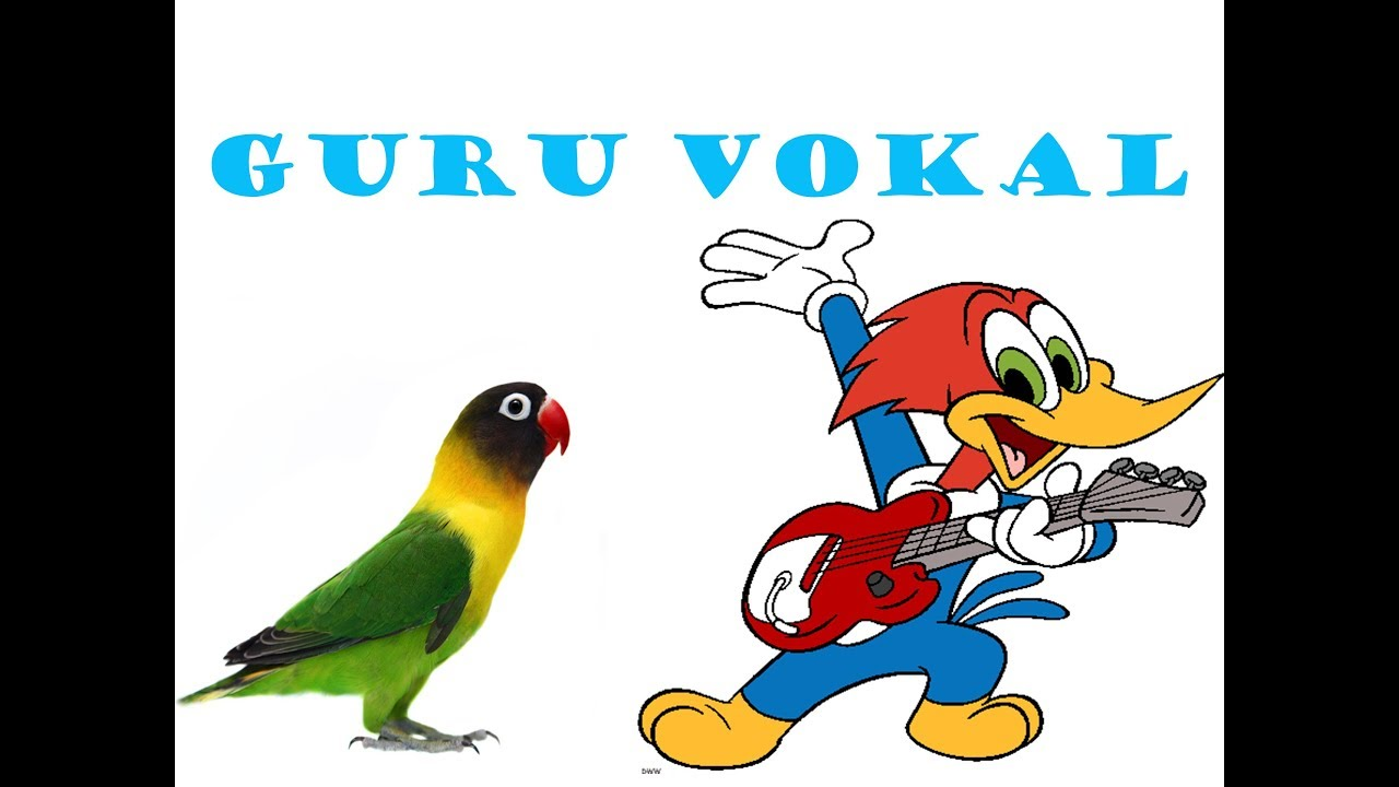 Burung Platuk Masteran Burung Lovebird Youtube