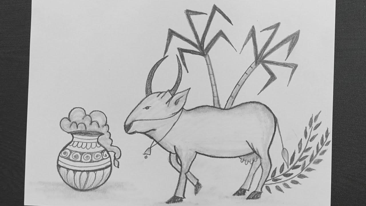 Mattu Pongal Drawing Pongal Festival Drawing Jallikattu Drawing Pencil Drawing Youtube
