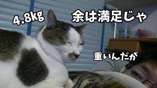 飼主の上を取れて満足そうな猫