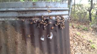 10 minutes with the trash can bees