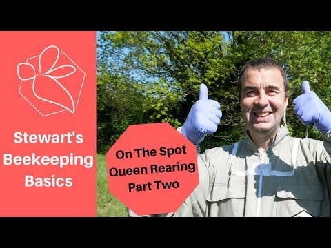 On The Spot Queen Rearing: Part Two - Stewart Spinks at The Norfolk Honey Co.