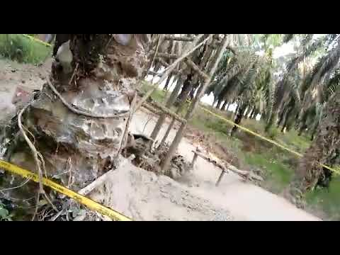 Akibat pengeboran minyak ilegal sungai bahar 7 Mp3