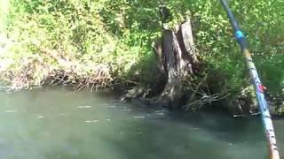 рано приехал (река БАЗЫР) В КОНЦЕ ВИДЕО НАДЫБАЛ