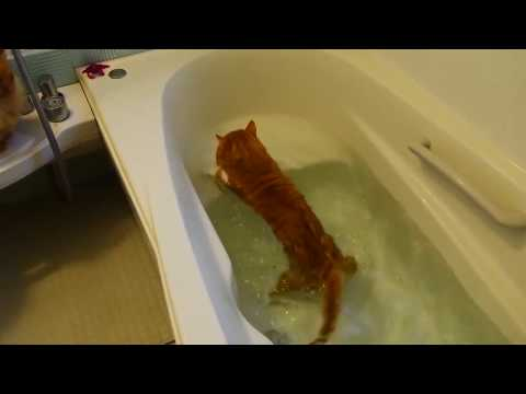 Cats Really Hate Water!  Funny Cats in Water 2017