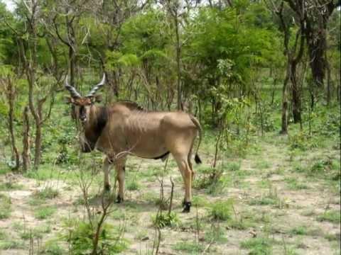 Reserva de Fathala, Senegal.
