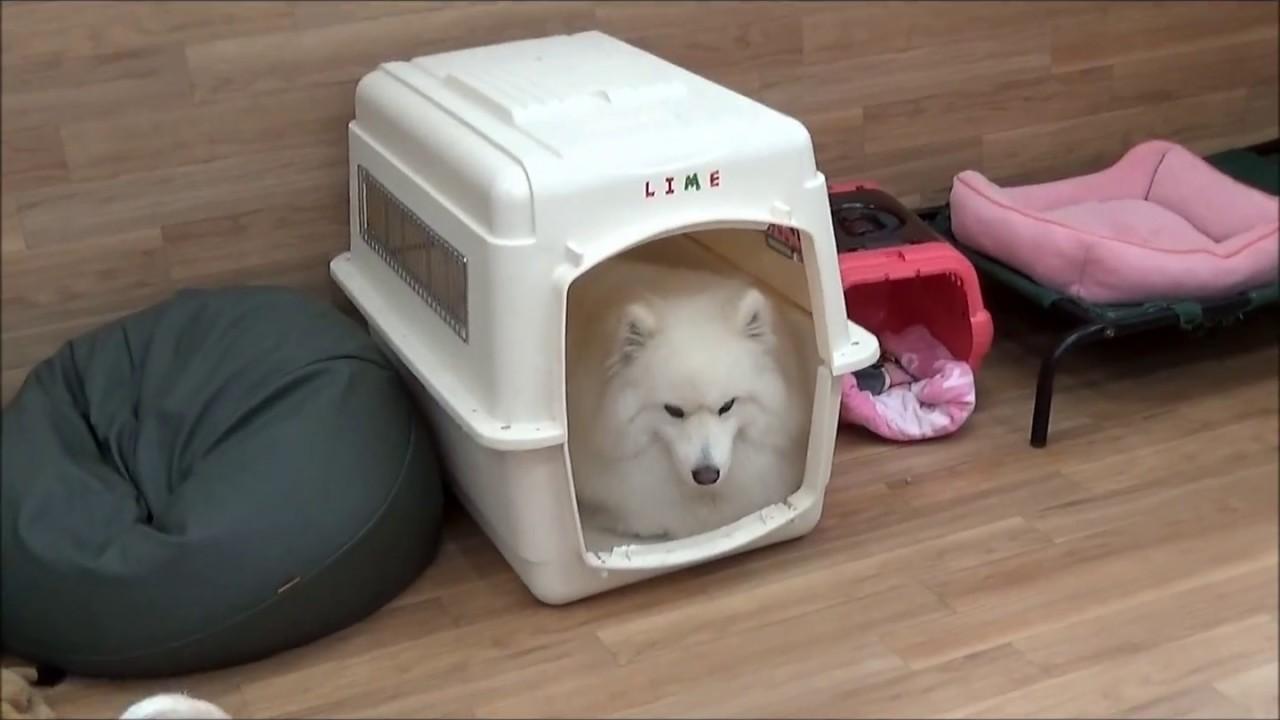 Ana Maljevic Nude トリミング・ペットホテル・犬の保育園|dog diamond|ドッグ
