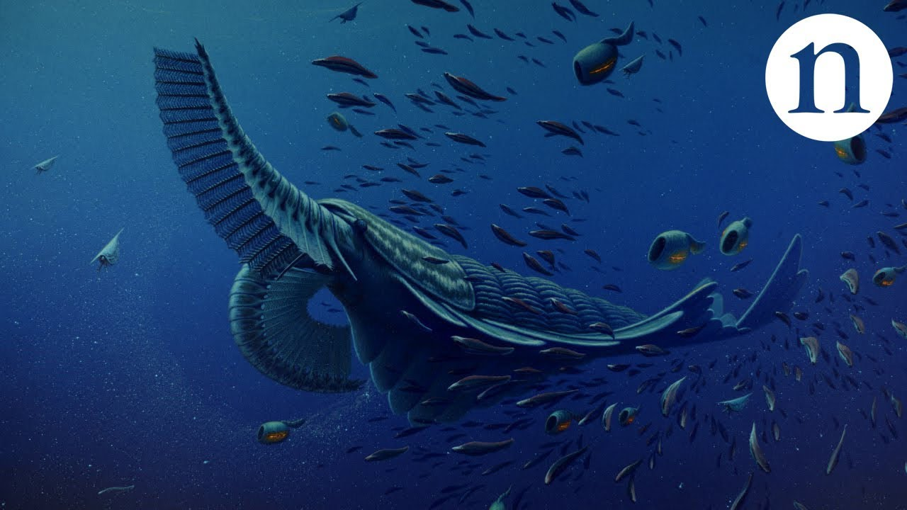 Gentle giants of the Cambrian