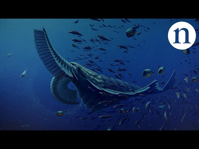 Revealing strange fossils from the first carnival of animals