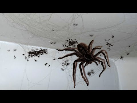 10 ENORMOUS Creatures That Will Scare You!