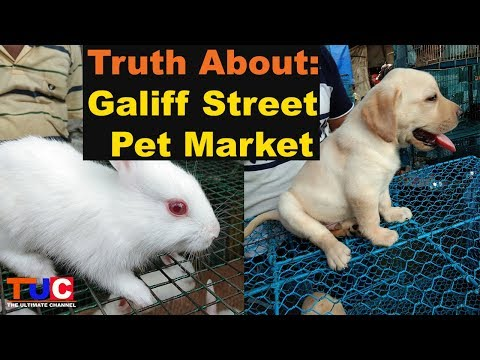 Truth About Galiff Street Pet Market : TUC