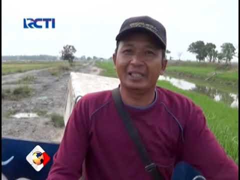 Warga Sragi, Lampung Selatan Keluhkan Jalan Rusak, Sinews Lampung (14/11)
