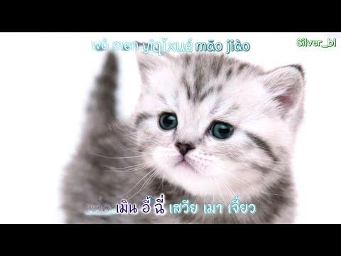 [เนื้อเพลง] เพลง เหมียวเหมียวในแอป TikTok ชื่อเพลง 学猫叫