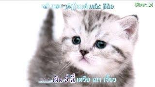 [คาราโอเกะ] เพลง เหมียวเหมียวในแอป TikTok ชื่อเพลง 学猫叫