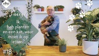 elho Plant hacks #18 planten en katten