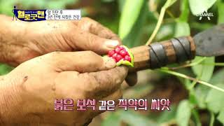 림프절암 진단 후 3년, 완전히 되찾은 건강! 비결은 자연 속 먹거리?! thumbnail