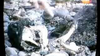 Cadáver de Extraña Criatura Encontrada...