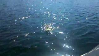 Titan, The Water Dachshund.