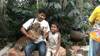 Feeding Tiger Cubs at the Safari World, Bangkok.