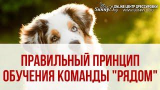"""Как научить собаку команде Рядом? Правильный принцип обучения собаки команде """"Рядом"""""""