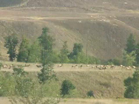Reclaimed strip mines in kentucky