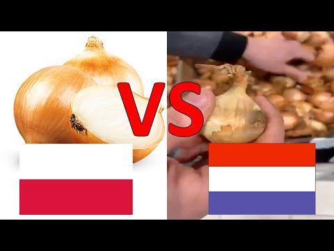 Wkurzony Rolnik Masakruje Holenderską Cebulę Z Lidla! Polskiej Cebuli Nie Dorasta Do Pięt?