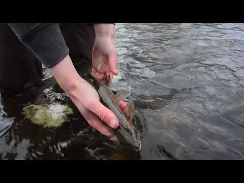 Fly Fishing The Goulburn River For Trout