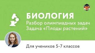 Биология   Подготовка к олимпиаде 2017   Задача «Плоды растений»