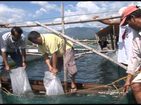 DA-BFAR: Bangus Development Program & Other Livelihood Interventions for Northern Mindanao Part 2