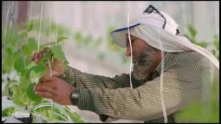 Sahara Forest Project: From vision to reality