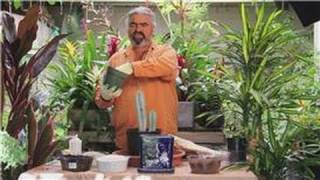 Gardening Help : How to Re-pot a Cactus