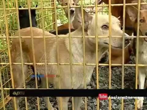 Sterilization camp for stray dogs at Kozhikode | കോഴിക്കോട് തെരുവുനായകള്ക്ക് വന്ധ്യംകരണം