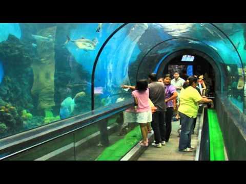 Phuket Aquarium - Phuket - YouTube