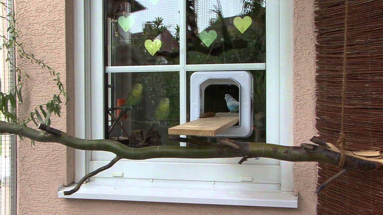 wellensittiche drau en halten youtube. Black Bedroom Furniture Sets. Home Design Ideas