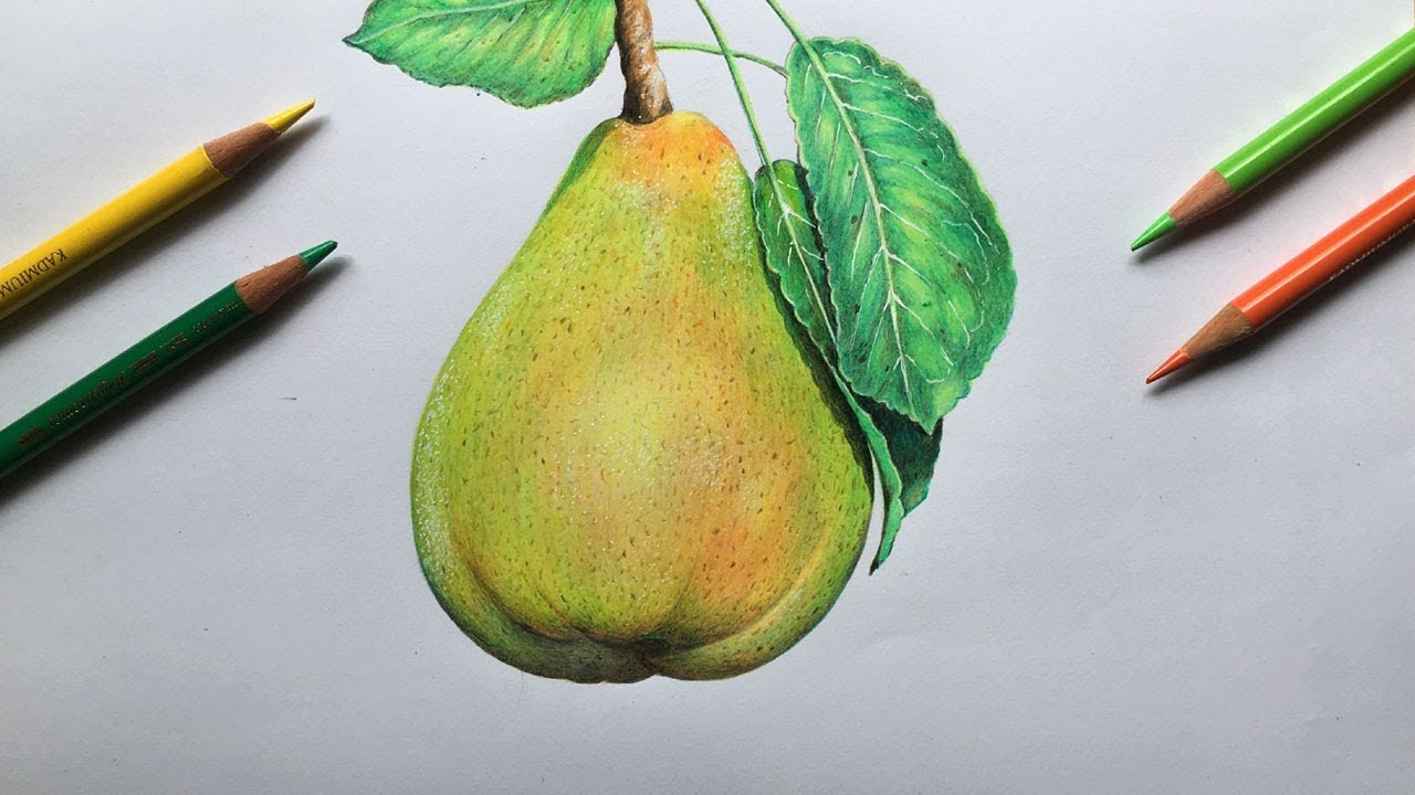 Drawing A Pear In Color Pencils