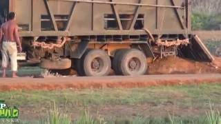 Release of Jumbo (Sri Lankan Elephant )